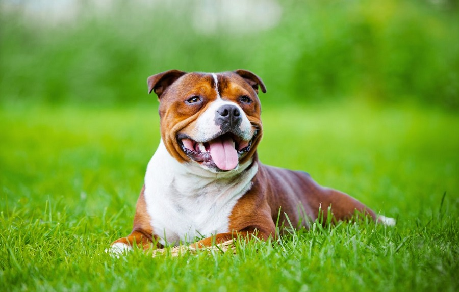 Породы собак  zooinformationru