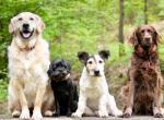 Какие породы собак лучше, смешанные или чистокровные?