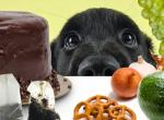 Продукты, которые могут навредить собаке