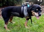 Рак костей (остеосаркома) у собак