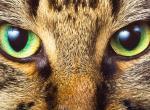 Видят ли кошки цвета?