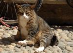 Кошки, жаркая погода и тепловой удар