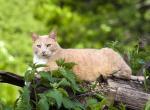 Сколько лет живут кошки - как увеличить продолжительность жизни питомца?