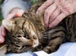 Терапевтический массаж для кошек