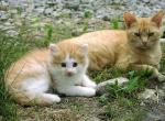 Кошка или котенок - на чем остановить выбор?