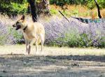 Первая помощь собакам при укусах насекомых