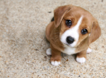 Почему у собак слезятся и текут глаза