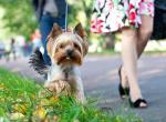 Популярные клички для собак девочек