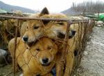 Какую породу собак едят?