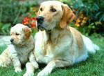 Все о собаках и щенках - некоторые интересные факты