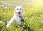 5 способов помочь вашей собаке в жаркую погоду
