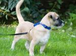 Когда и как приучать щенка к прогулке