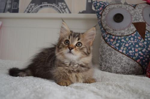 имена для кошек мейн-кун девочек
