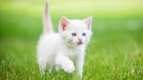 клички белых котов мальчиков