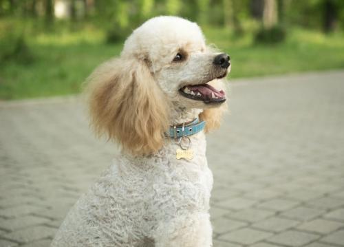 Самые популярные средние породы собак