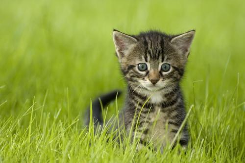 Имена для кота русские и красивые