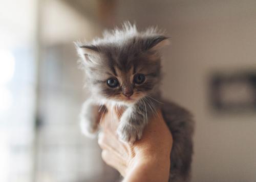 Котенок 5 недель