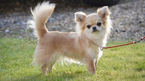породы собак весом до 10 кг