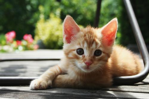 Арчи имя для кота