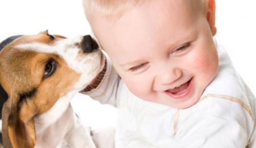 Собаки, маленькие дети и младенцы, ребенок и собака, меры предосторожности,