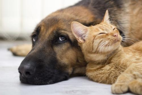 Интересное о котах и собаках