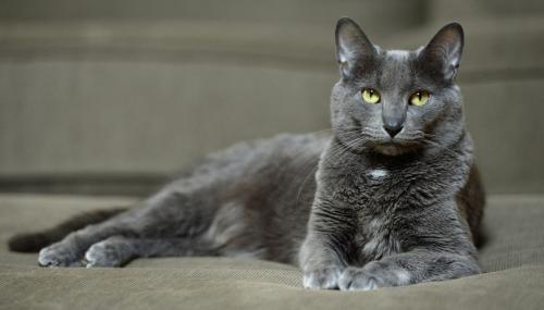 Самые маленькие породы домашних кошек