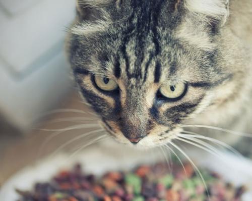 Сахарный диабет у кошек - симптомы, признаки и лечение