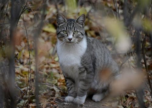 Как справиться с дикими кошками