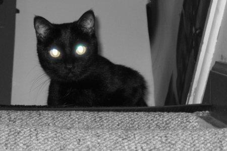 Глаза кота светятся