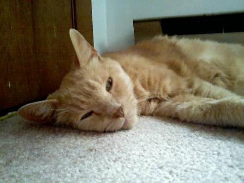 Болезнь почек у кошек: симптомы и лечение