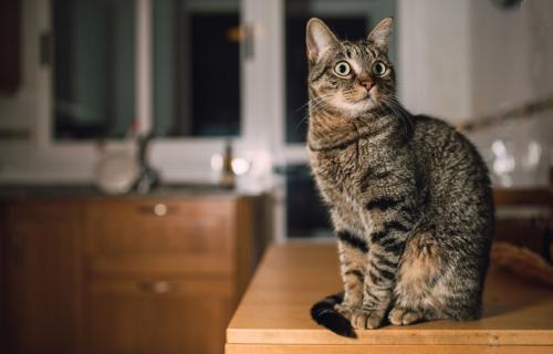 Чем может отравиться кошка или кот