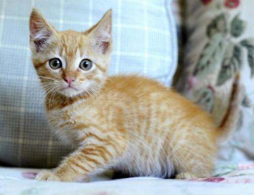 Социализация котенка и молодой кошки