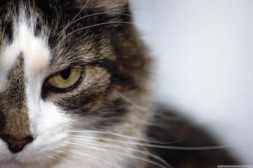 Язык тела вашей кошки