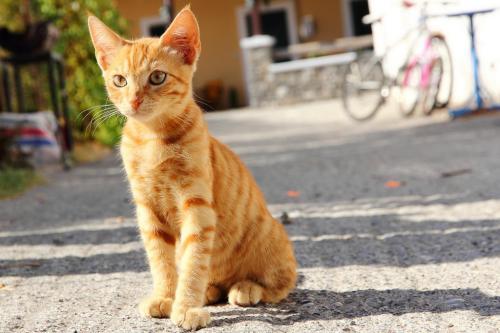 Лямблии у кошек: симптомы, диагностика и лечение