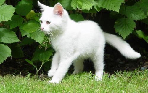 Как можно назвать кота мальчика имена