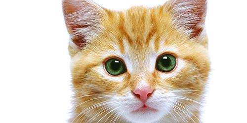 Имена и клички для котов мальчиков