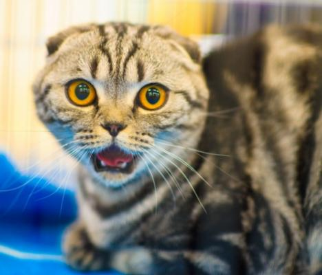 Судорги у кота
