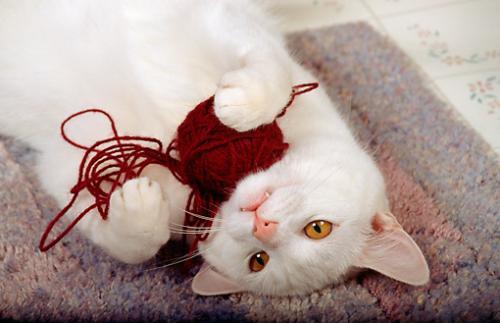 Почему кошки едят шерсть?