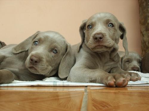 Прикольные клички для собак девочек