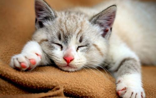Почему кошки такие милые?