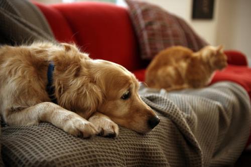 как избавиться от перхоти собаки
