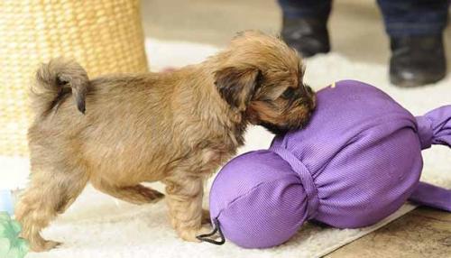 Социализация щенка: ключ к хорошо обученной и уравновешенной собаке