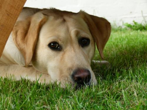 Гон у собак - 10 самых часто задаваемых вопросов