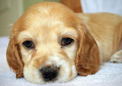 8 фактов о стерилизации собак