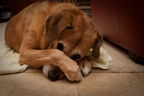 Почему у собаки пахнет изо рта - причины и лечение