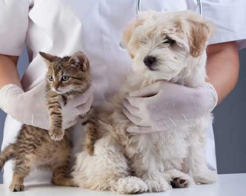 Как получить максимум от визита к ветеринару