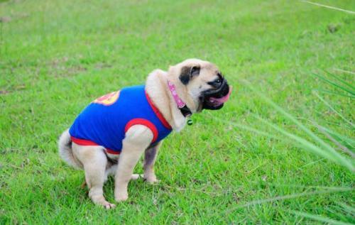 Запор у собак: причины, симптоматика и лечение