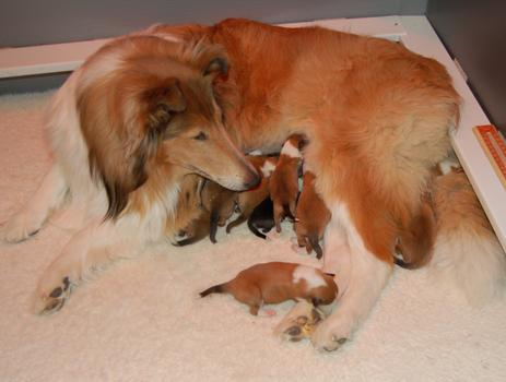 Разведение собак - проблемы при рождении