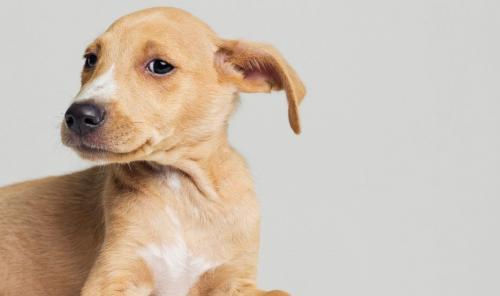 Применение ушных капель для собак