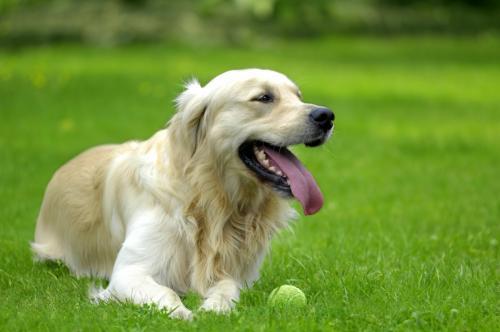 Основные принципы ухода за собакой
